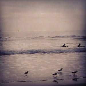 beach filtered