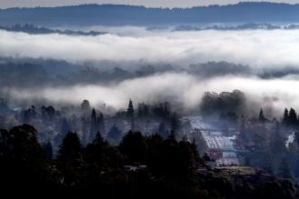 sc fog