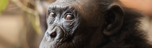 primate-to-people-ploys
